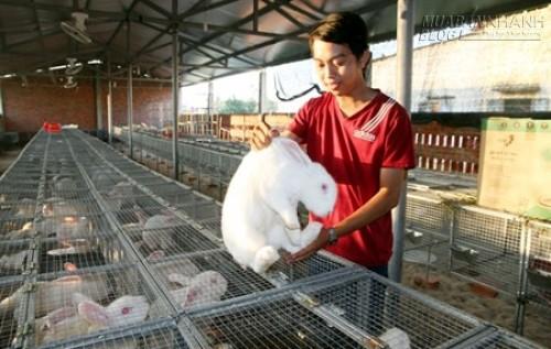 9X nuôi thỏ thu tiền tỷ mỗi năm, 37720, Nguyên Khang, Blog MuaBanNhanh, 17/05/2015 17:00:25