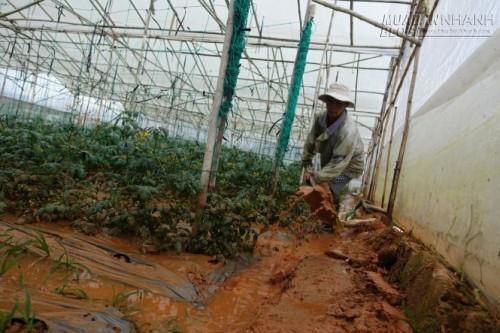 Mưa lớn làm vùng rau Đà Lạt ngập nặng, 39171, Nguyên Khang, Blog MuaBanNhanh, 01/06/2015 17:48:59