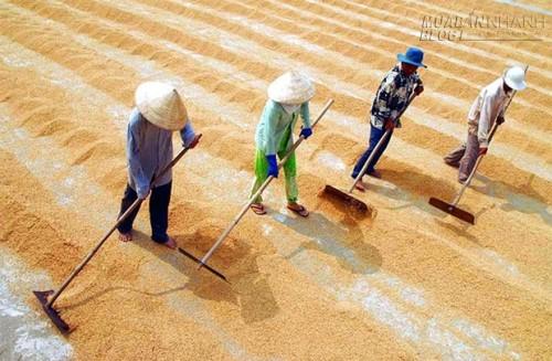 Xuất khẩu nông sản: Giảm không chỉ vì tỷ giá, 40060, Lavender, Blog MuaBanNhanh, 10/06/2015 16:24:15