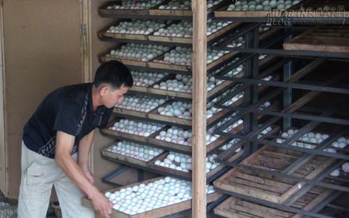 Làm giàu từ lò ấp trứng vịt, 41298, Lavender, Blog MuaBanNhanh, 20/06/2015 10:50:01