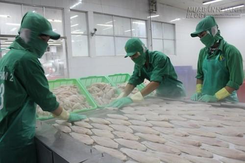 Tranh cãi về thủ tục xuất khẩu cá tra, 42201, Lavender, Blog MuaBanNhanh, 27/06/2015 08:24:00