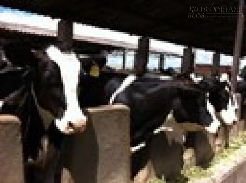 WB tài trợ bổ sung 45 triệu USD cho chăn nuôi, 42379, Lavender, Blog MuaBanNhanh, 28/06/2015 16:45:35