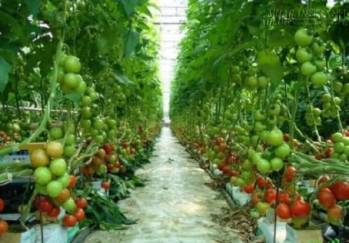Nông nghiệp cũng khổ vì thủ tục, 42433, Lavender, Blog MuaBanNhanh, 29/06/2015 08:13:55