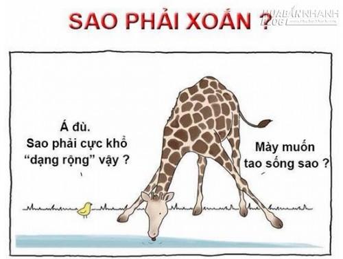 Chết cười với bộ ảnh siêu hài về khủng long, thỏ,rắn, voi..., 45703, Nguyễn Thu Hương , Blog MuaBanNhanh, 29/07/2015 10:20:50