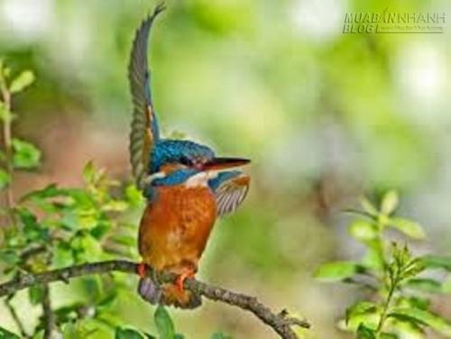 Con chim trên cành cây, 46809, Nguyên Khang, Blog MuaBanNhanh, 06/08/2015 22:32:47