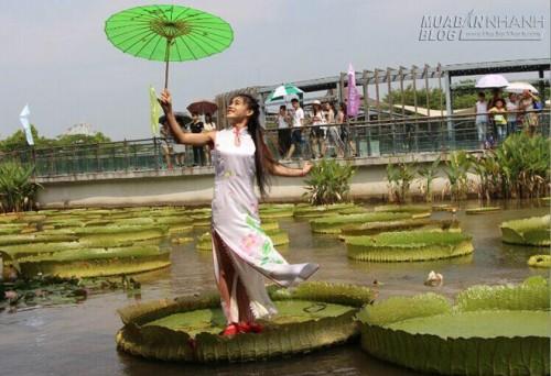 Kỳ lạ loài sen vua người nặng 70kg có thể đứng lên, 49022, Nguyễn Thu Hương , Blog MuaBanNhanh, 25/08/2015 07:51:11