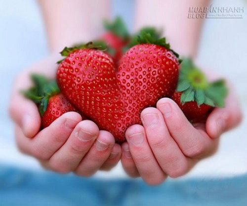 Bài học từ hũ dưa chuột muối, 49036, Lavender, Blog MuaBanNhanh, 25/08/2015 09:17:17