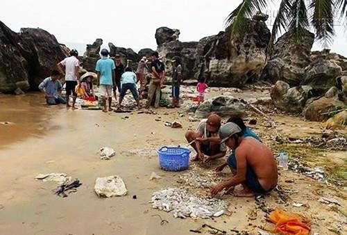 Hải sâm dạt dày đặc trên bãi biển Phú Quốc, 51754, Nguyễn Thu Hương , Blog MuaBanNhanh, 20/09/2015 09:57:01