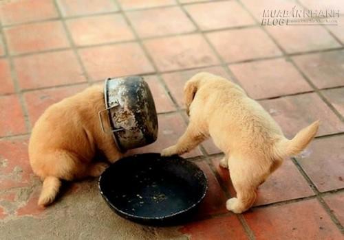 Cười đau bụng với nỗi lòng của những chú chó nghịch dại, 54375, Nguyễn Thu Hương , Blog MuaBanNhanh, 17/10/2015 15:51:23