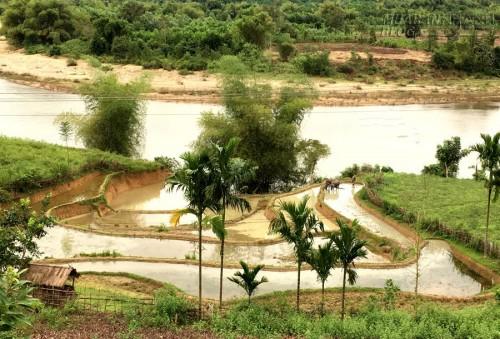Vẻ đẹp ruộng vùng cao ở Quảng Ngãi, 59883, Lavender, Blog MuaBanNhanh, 30/03/2020 10:40:24