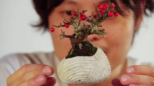 Lạ mắt với mẫu cây bonsai bay lơ lửng trên không trung, 64990, Nguyễn Thu Hương , Blog MuaBanNhanh, 05/02/2016 12:13:02