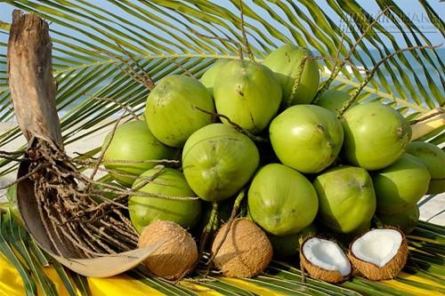 Nước dừa – vị thuốc cho sức khỏe, 65371, Nguyễn Thu Hương , Blog MuaBanNhanh, 30/03/2020 10:23:48
