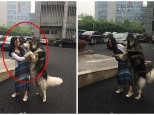 Không nhặt được mồm với chú chó Husky sàm sỡ người đi đường, 69763, Nguyễn Thu Hương , Blog MuaBanNhanh, 21/04/2016 11:24:12