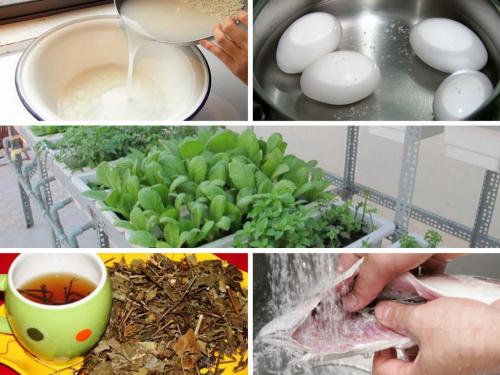 Mẹo nhỏ hữu ích giúp cây trồng nhà bạn phát triển xanh tốt, 72613, Phương Thảo, Blog MuaBanNhanh, 21/10/2016 09:57:27