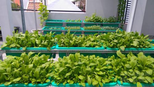 Những lưu ý giúp bạn trồng rau tại nhà vô cùng hiệu quả, 72615, Phương Thảo, Blog MuaBanNhanh, 22/10/2016 11:09:10