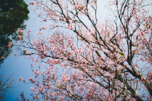 3 loài hoa đẹp khiến bạn chỉ muốn lạc trôi tới Đà Lạt ngay và luôn, 73758, Lavender, Blog MuaBanNhanh, 01/03/2017 13:43:55