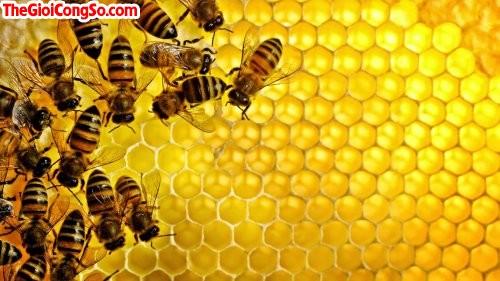Cách nhận biết mật ong thật, 32923, Minh Tâm, Blog MuaBanNhanh, 15/01/2015 09:15:51