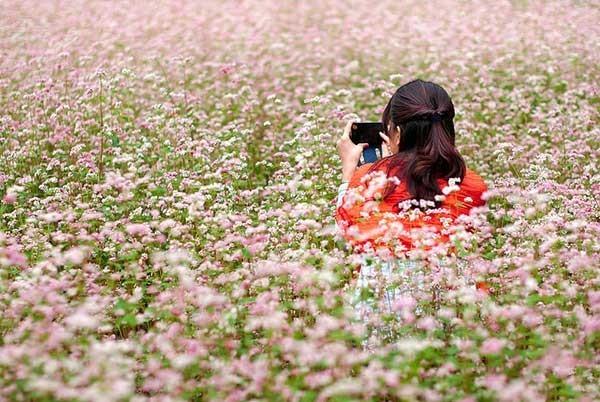 Câu chuyện về loài hoa tam giác mạch(1)