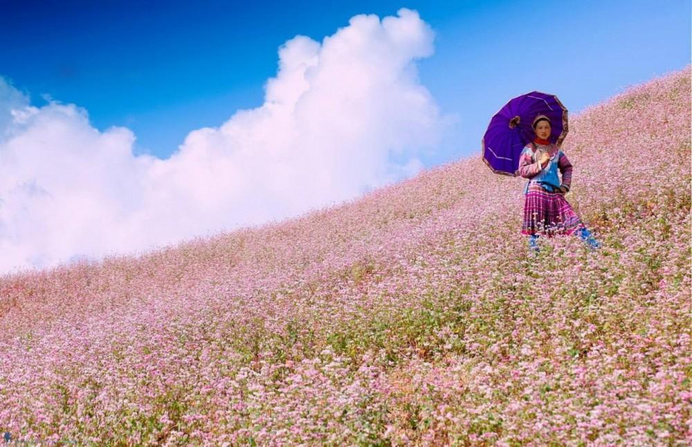 Câu chuyện về loài hoa tam giác mạch(2)