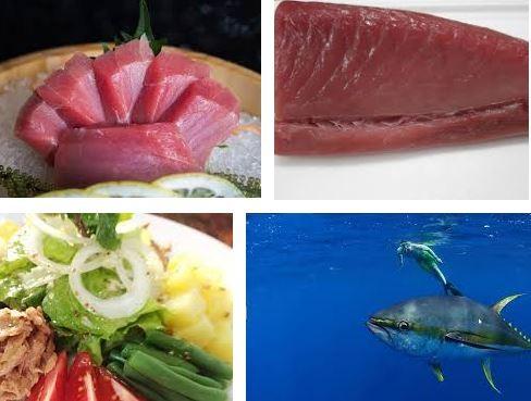 cá ngừ được biết tới như một món ăn đại bổ.