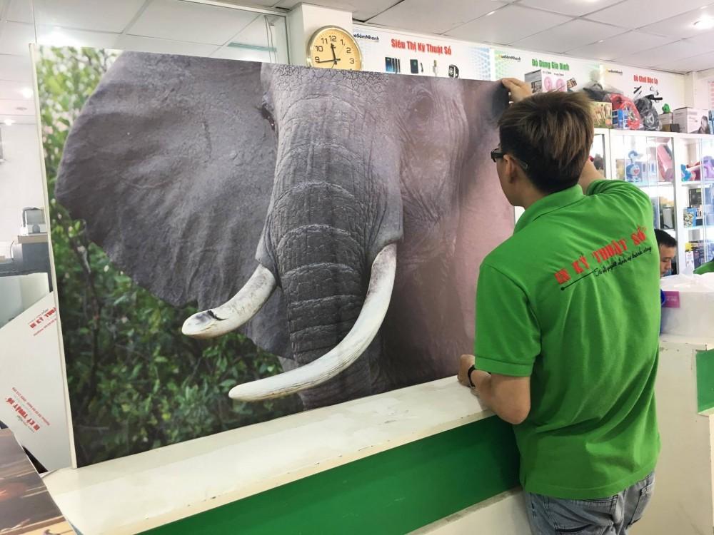 In tranh canvas khổ lớn - in tranh động vật trang trí văn phòng làm việc, không gian văn phòng