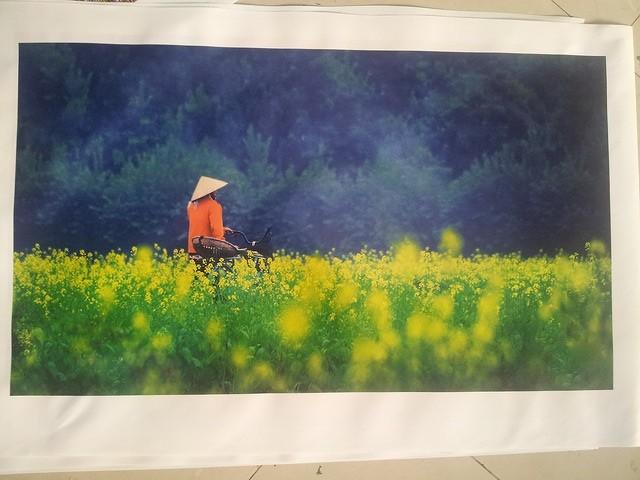 Cánh đồng hoa cải - in tranh thiên nhiên, vùng quê yên bình - tranh in canvas mực nước tại In Kỹ Thuật Số