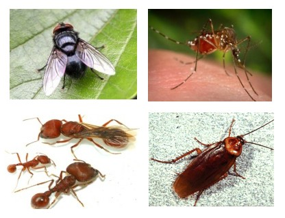 Diệt muỗi, gián, kiến và côn trùng gây hại
