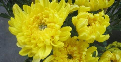 hoa cúng thôi nôi 1