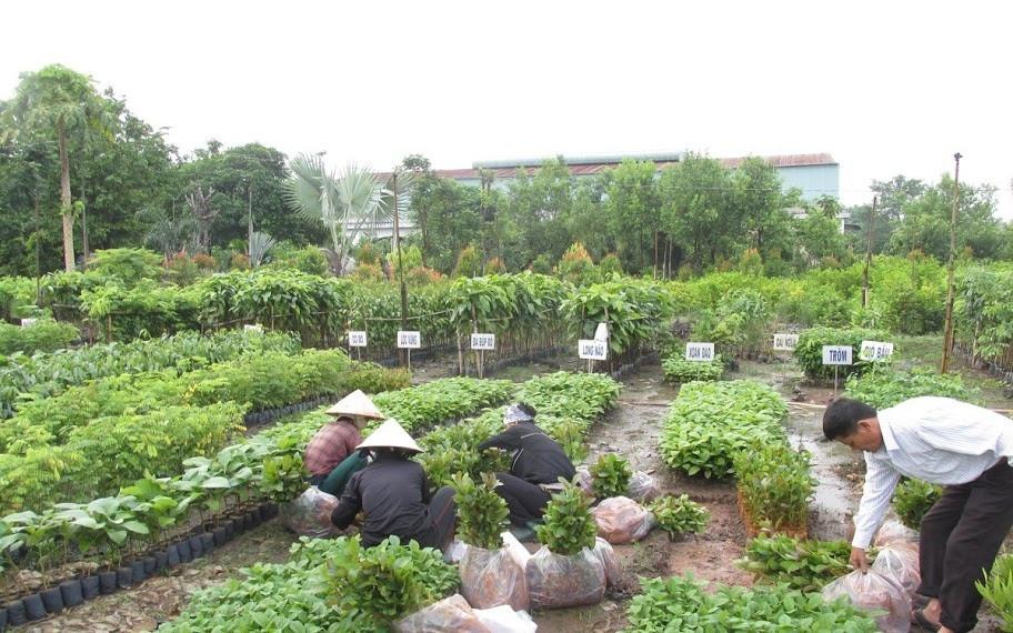Giới thiệu công ty cây xanh Gia Nguyễn