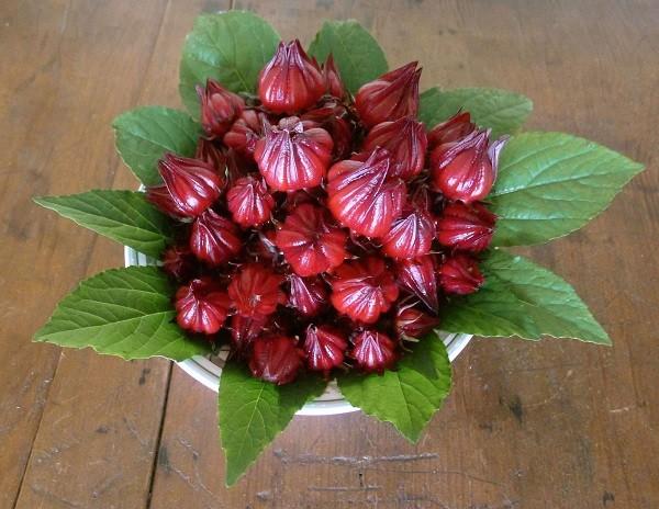 Hoa Atiso đỏ kết hợp nhiều món ăn ngon tốt cho sức khỏe