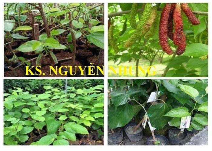 Giới thiệu trung tâm cây giống cây trồng công nghệ cao Việt Nam