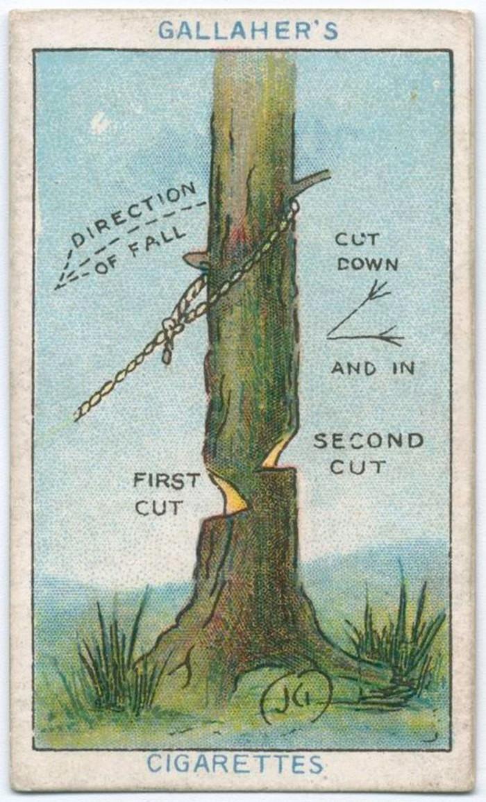 Cách chặt cây đổ đúng hướng