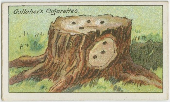 Cách để loại bỏ một gốc cây