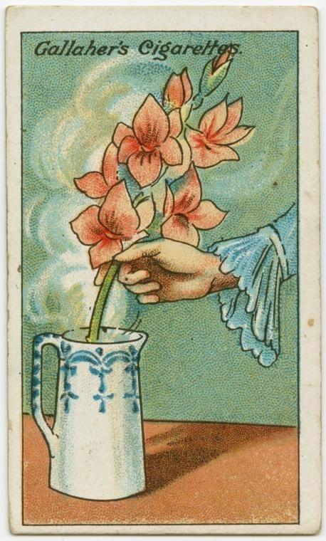 Cách giúp hoa héo tươi trở lại
