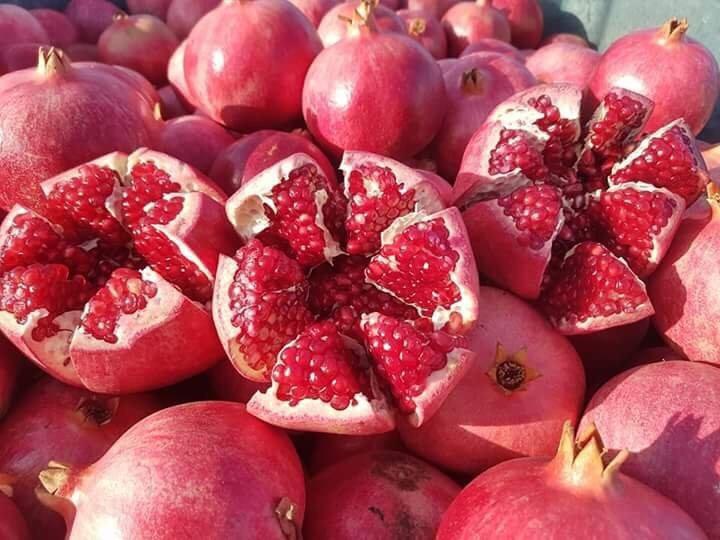 Nơi bán cây giống lựu đỏ lùn Ấn Độ uy tín, chất lượng tại Hà Nội