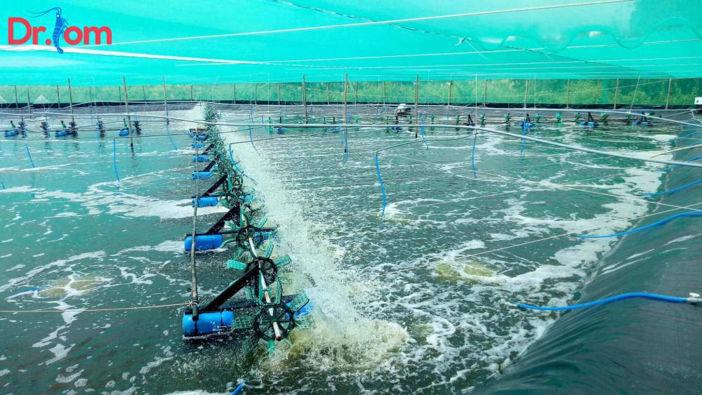 Tìm hiểu một số cách gây màu nước trong ao nuôi tôm
