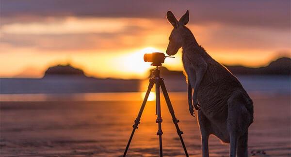 """Bí quyết """"vàng"""" để xin visa đi Úc thành công"""