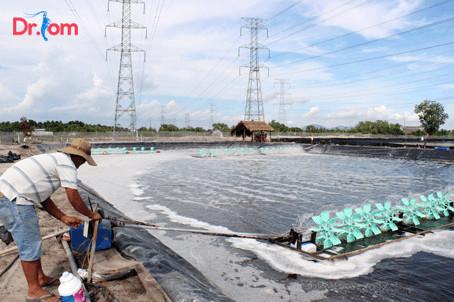 Xử lý nước ao nuôi tôm như thế nào để đạt hiệu quả tốt nhất?