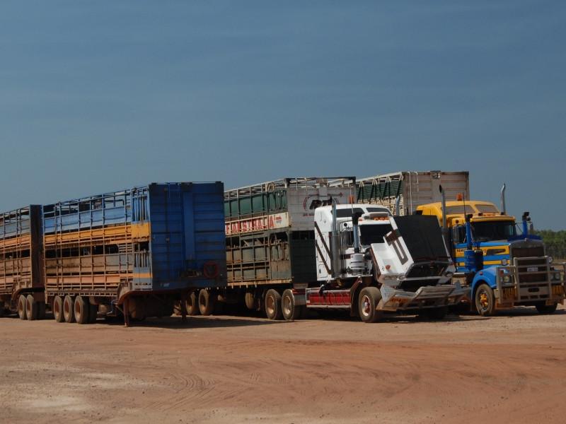 Kinh doanh dịch vụ chuyển hàng Trung Quốc về Việt Nam