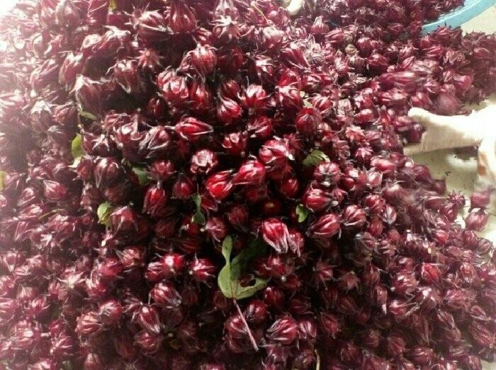 Mua hoa atiso đỏ tại Đồng Nai(4)