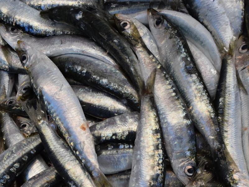 Những lưu ý khi chọn mua, sơ chế và bảo quản khô cá
