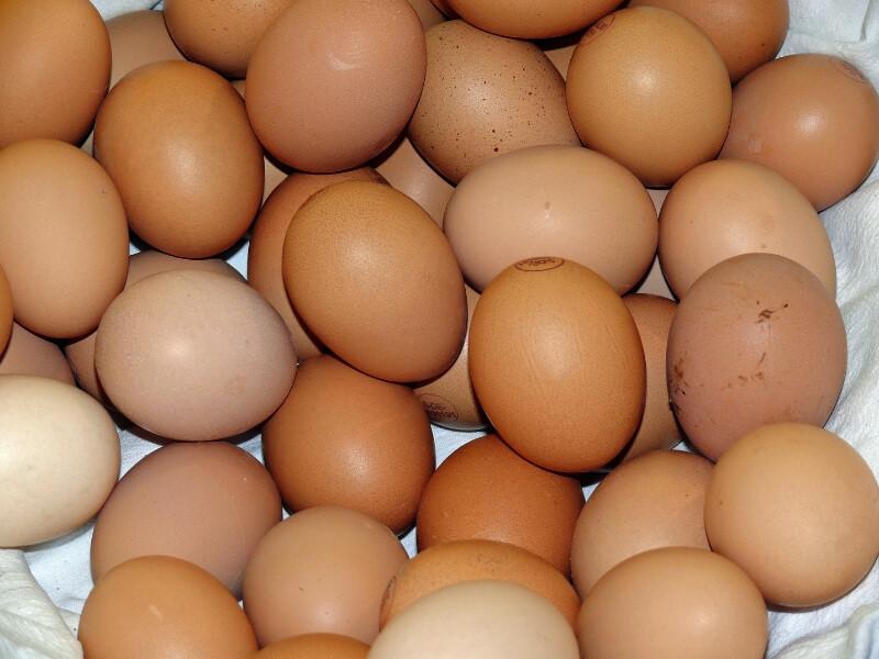 Ăn trứng gà nhiều hay ít sẽ liên quan đến tỉ lệ tử vong ở nam và nữ