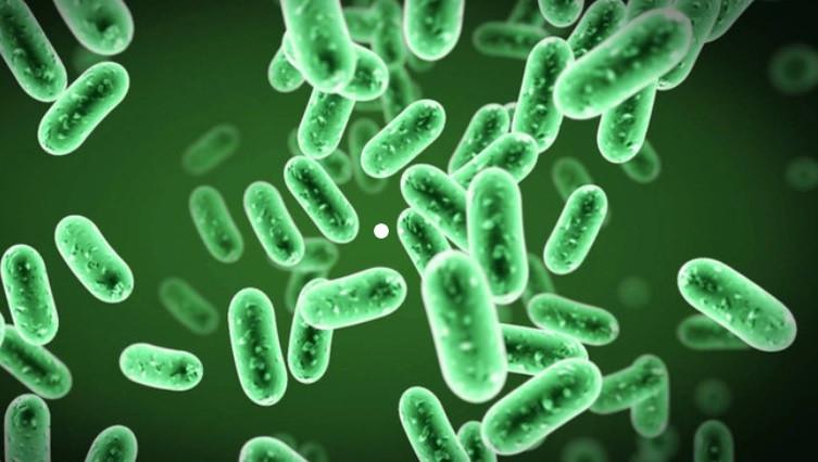 Bệnh nhiễm trùng do vi khuẩn và virus là bệnh gì ?