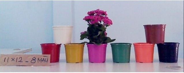 Mẫu chậu trồng cây bằng nhựa giá rẻ