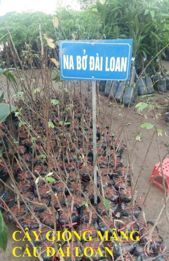 Báo giá cây giống na bở Đài Loan