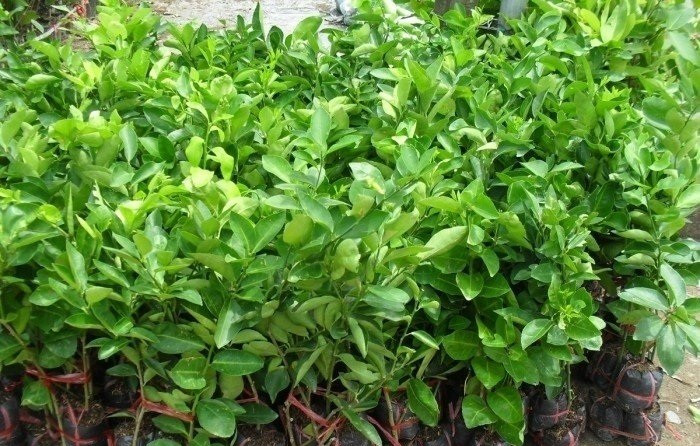 Cây Xanh Gia Nguyễn - Địa chỉ cung cấp giống cây trồng uy tín