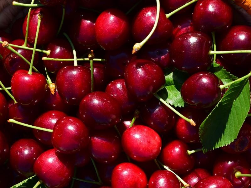 Quả Cherry ăn như thế nào?