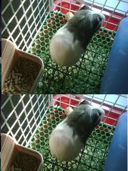 Chọn mua lồng nuôi thú cứng, mèo, chuột, chó từ lưới nhựa cứng - Công ty CP TVXD & TM GOLF IMG Việt Nam