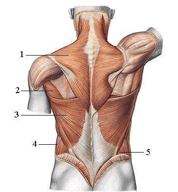 Đau thắt lưng do nguyên nhân nào? Điều trị được không?(1)