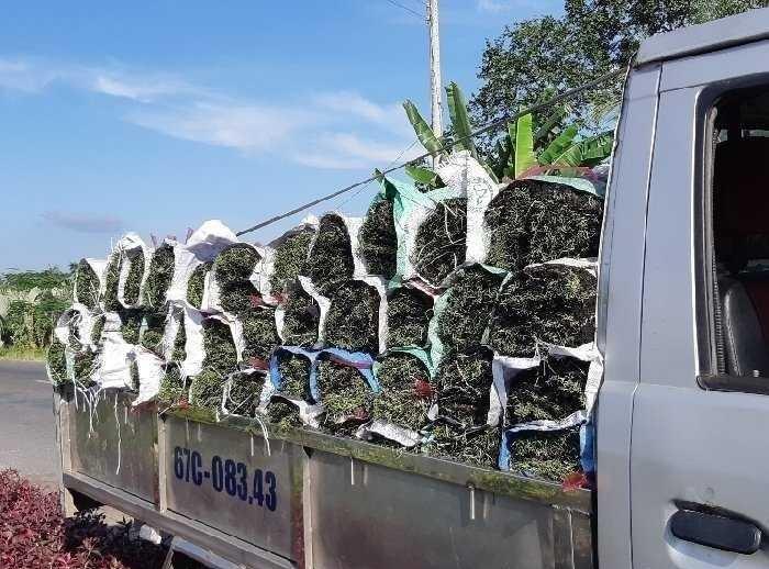 Kinh nghiệm tìm mua cỏ trang trí sân vườn tại TPHCM
